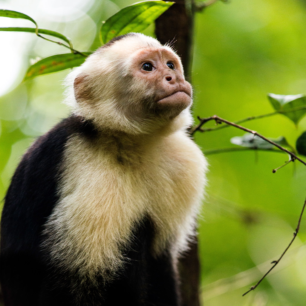 Best Family Friendly Eco Tours In Costa Rica Travel Leisure