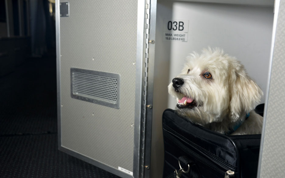 American Airlines Announces First Class Cabins for Pets