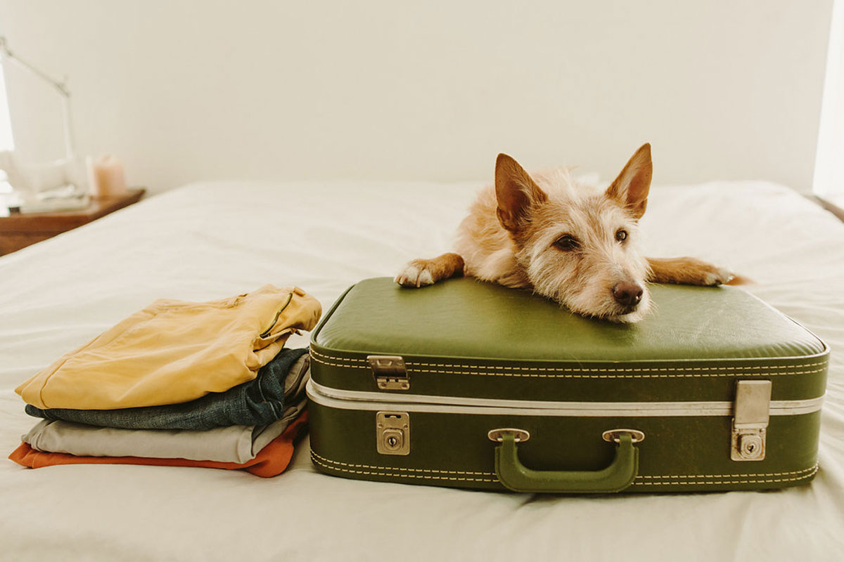 The Definitive Guide to Traveling With Your Pet