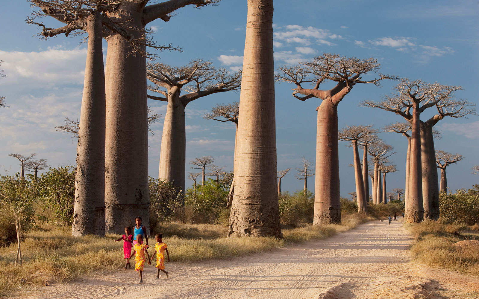 Madagascar S Avenue Of The Baobabs Travel Leisure