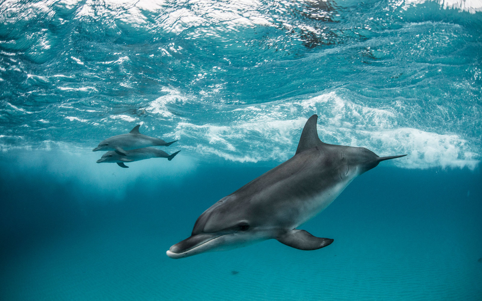 Researchers record first-ever dolphin conversation
