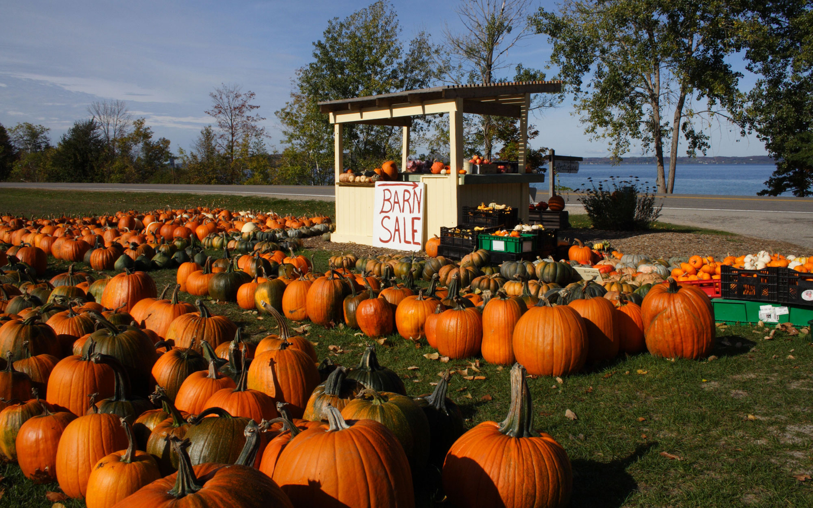pumpkin patch in Traverse City, Michigan