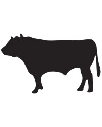 Guide to Beef