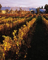 Five Wine Regions on the Cusp of Greatness