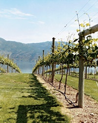 Okanagan Valley Wine Region