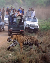 India S Best Wildlife Safaris Travel Leisure