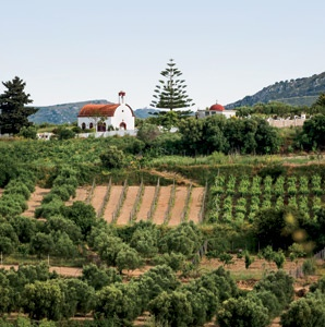 Greece: Europe's Newest Wine Country