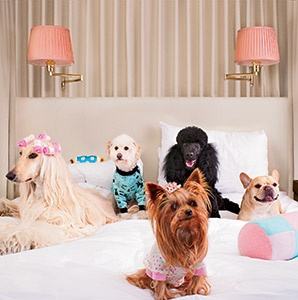 Dog-Friendly Hotels