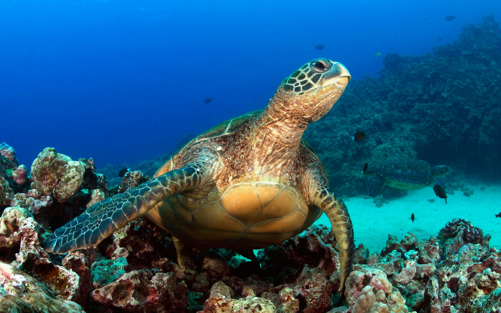 A Hawaii Snorkel To Save Maui S Reefs Travel Leisure