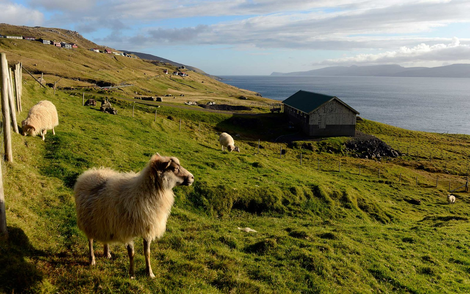 Forget Google Street View, meet this tiny island's sheep view