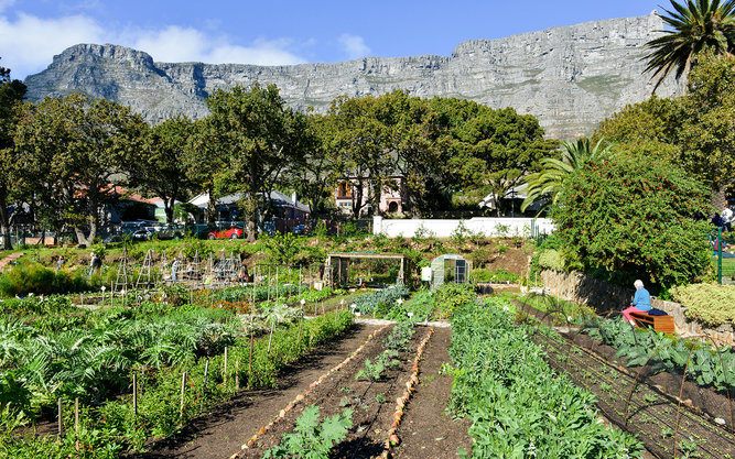 Oranjezicht City Farm Market in Cape Town