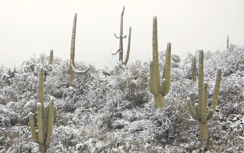 Saguaro National Park Arizona Winter