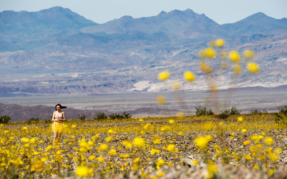 Death Valley comes alive with super bloom of flowers