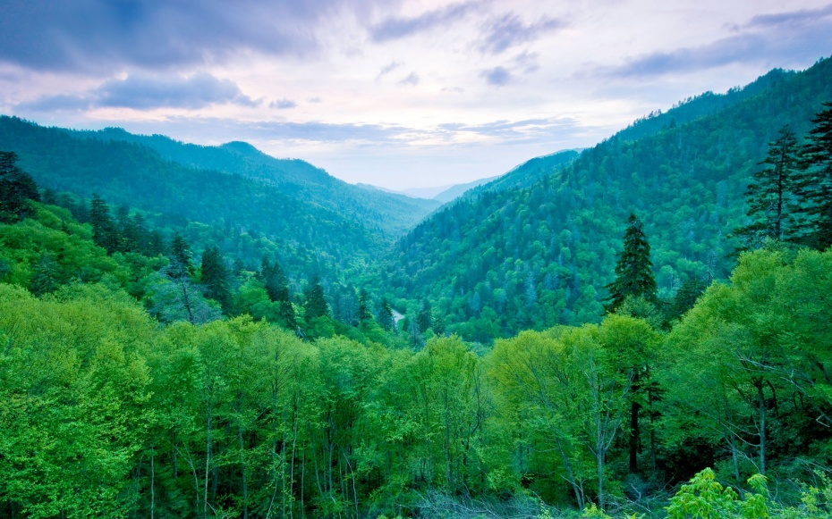 Pet Friendly Hotels White Mountains