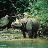 Searching for the Javan Rhino in Indonesia