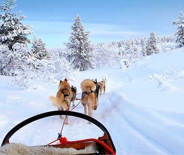 dog sled in the snow in Finland