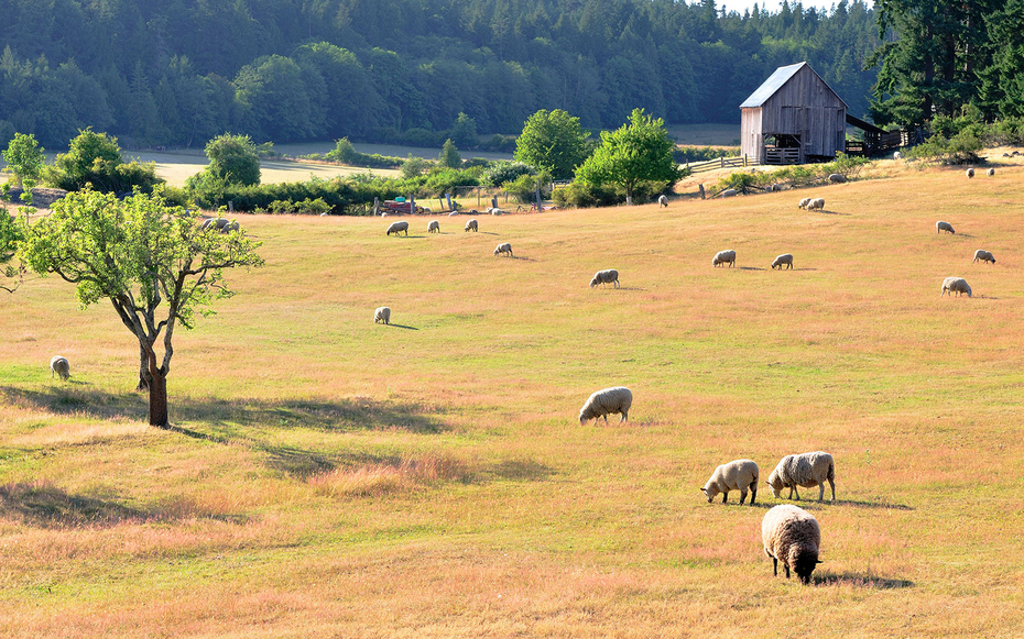 Cheese Makers On Salt Spring Island
