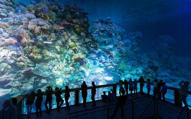 great barrier reef exhibit