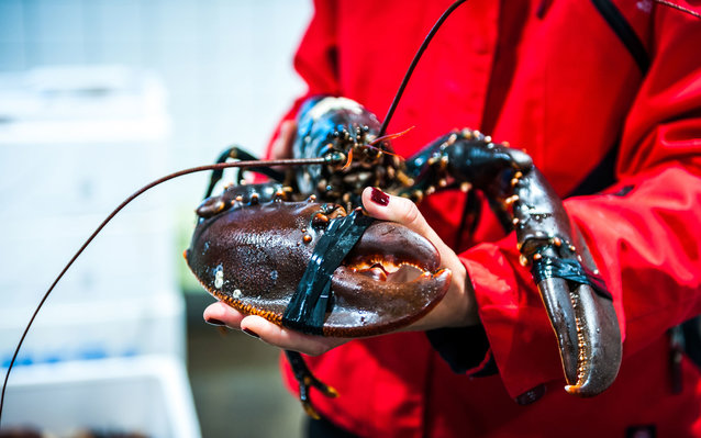 Gothenburg Sweden Lobster