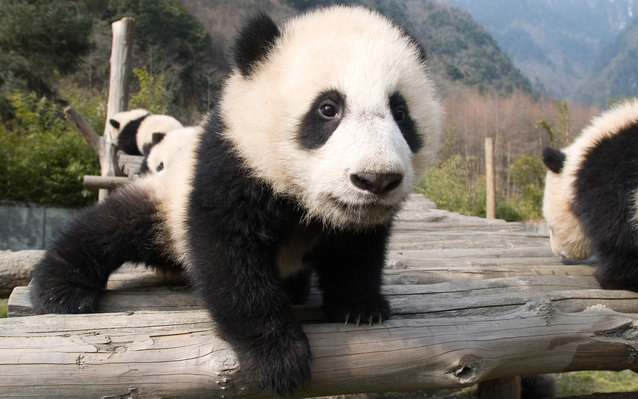 China Proposes National Parks for Animals