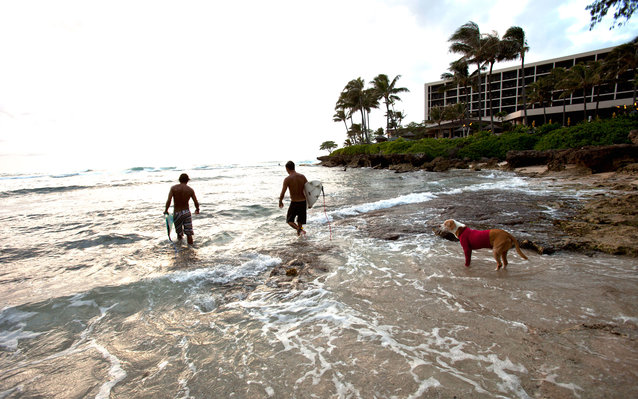 Adopt a dog for a day on vacation in Hawaii
