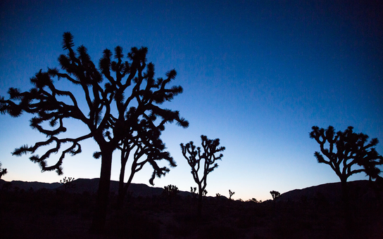 Jose Tree Landscape Dusk