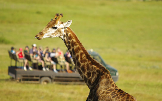 ***EXCLUSIVE***