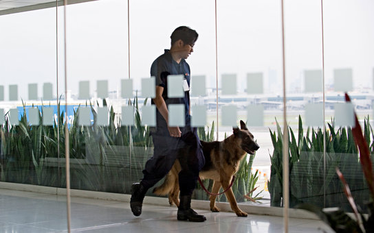 Airport Security Dog