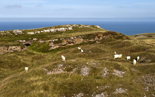 Great Orme Sheep Farm