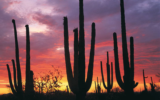 Sunset in Tucson, Arizona