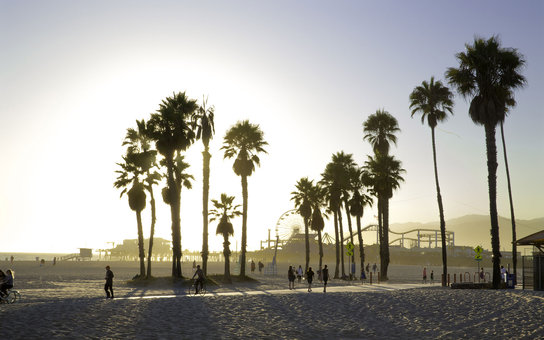 sun setting through the palm trees on the beach in Los Angeles, CA