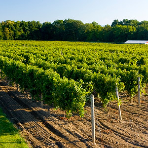 Finger Lakes History and Wine