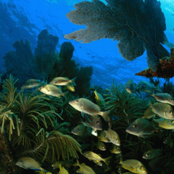 Key largo snorkeling travel leisure for Weekend getaways from miami