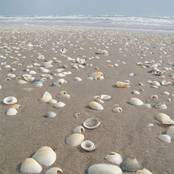 Shelling In Port Aransas Texas Travel Leisure