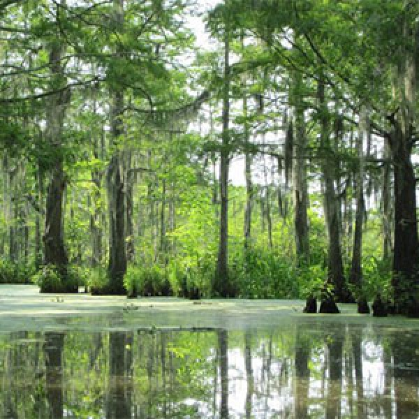 Swamp Adventures in St. Tammany Parish, Louisiana